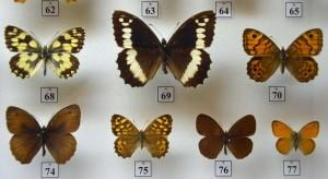 Vlastivedné múzeum v Hlohovci - Prírodovedná expozícia